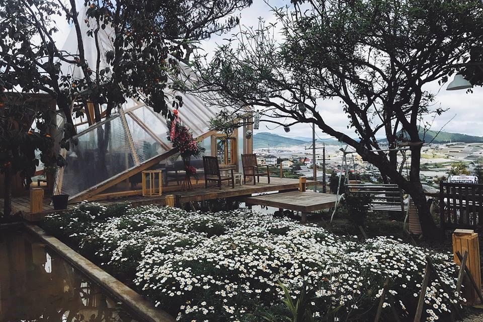 Tiệm Cafe Túi Mơ To Đà Lạt cả khu vườn hoa cúc họa mi trắng cực ...
