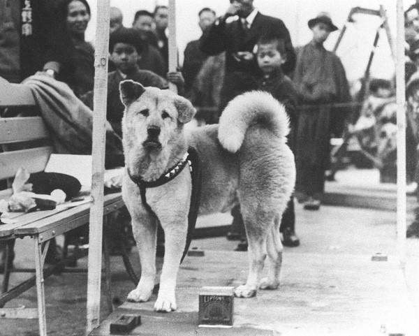 Chú chó Hachiko trung thành
