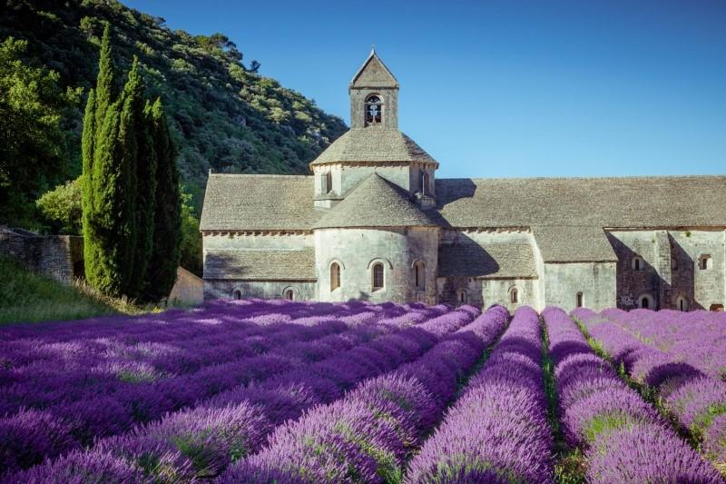 Ở Pháp còn nổi tiếng với những cách đồng hoa oải hương bất tận, sắc tím trải dài tạo nên một khung cảnh vô cùng nên thơ và lãng mạn.