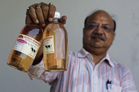 nước tiểu bò trị ung thư